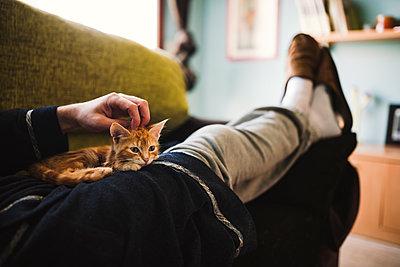 Tabby kitten relaxing on the lap of owner - p300m1205967 by Ramon Espelt