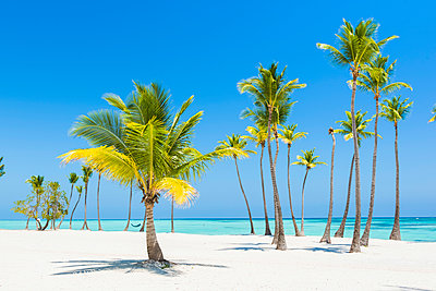 Juanillo Beach (playa Juanillo), Punta Cana, Dominican Republic. - p651m2006997 by Marco Bottigelli