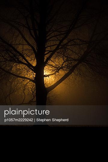 Tree in the fog - p1057m2229242 by Stephen Shepherd