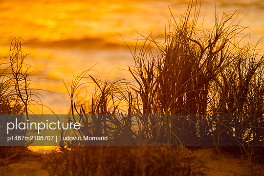 Plants in front on the Indian ocean during the golden hours - p1487m2108707 by Ludovic Mornand