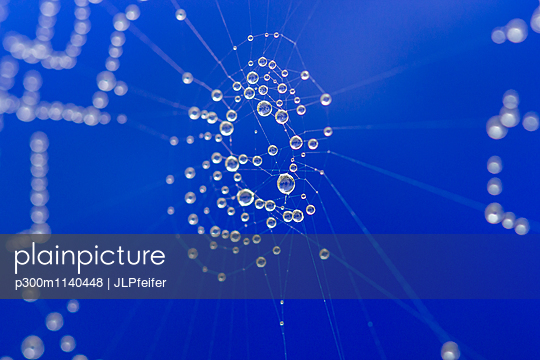 Spider net and water drops, close-up - p300m1140448 by JLPfeifer