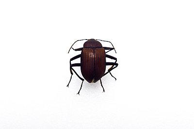 Käfer - p1613m2247559 von pohlit