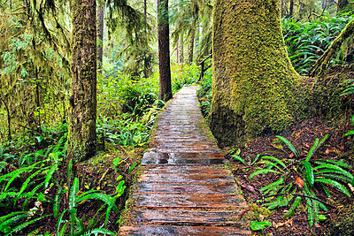 Boardwalk On The Rainforest Trail In Pacific Rim National Park; Vancouver Island British Columbia Canada - p442m839393 by Ken Gillespie
