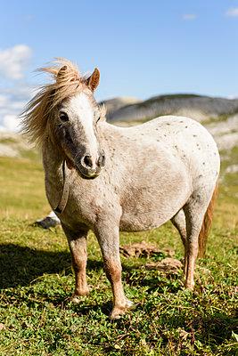 Pony in Berglandschaft, Trentino, Belluno - p1273m1198513 von melanka