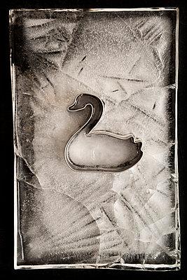 Eisiger Schwan - p451m1511426 von Anja Weber-Decker