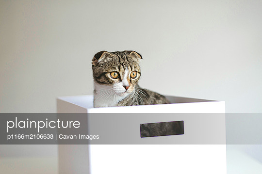 Cute adorable cat  playing in a box - p1166m2106638 by Cavan Images