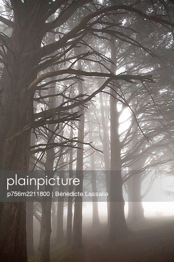 Trees in the fog - p756m2211800 by Bénédicte Lassalle