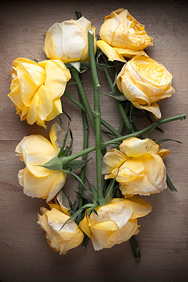 Bunch of yellow roses on a wooden surface - p1302m1510407 by Richard Nixon
