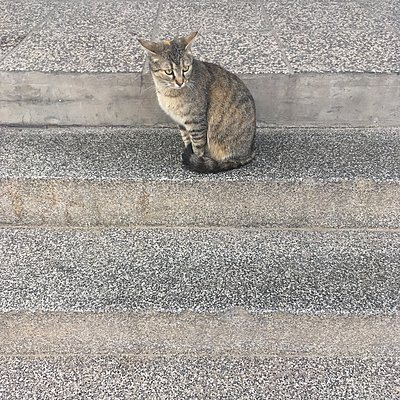 Cat sitting on steps - p1401m2071790 by Jens Goldbeck