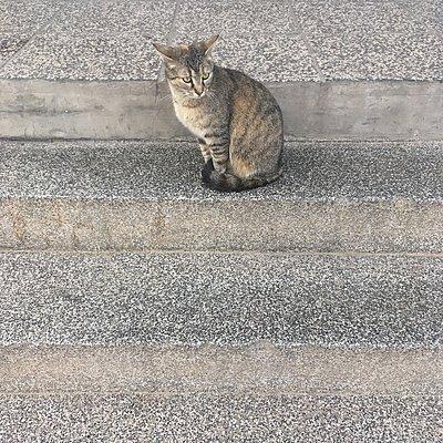 Katze sitzt auf einer Stufe - p1401m2071790 von Jens Goldbeck