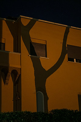 Shadow of tree sculpture  on a facade at night, Rome - p1600m2175108 by Ole Spata