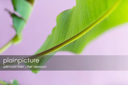 p301m2075581 von Ralf Hiemisch