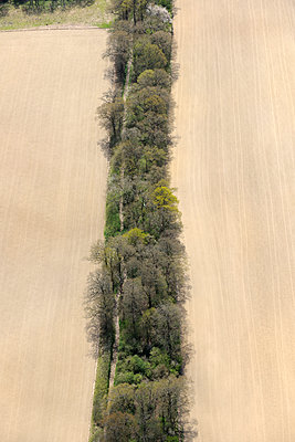 Aerial view narrow forest - p1048m1123549 by Mark Wagner