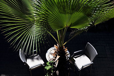 Seat under palm tree - p1063m1538355 by Ekaterina Vasilyeva