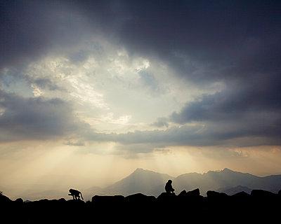 Affen in den Sarawat Bergen, Saudi-Arabien - p1542m2142344 von Roger Grasas