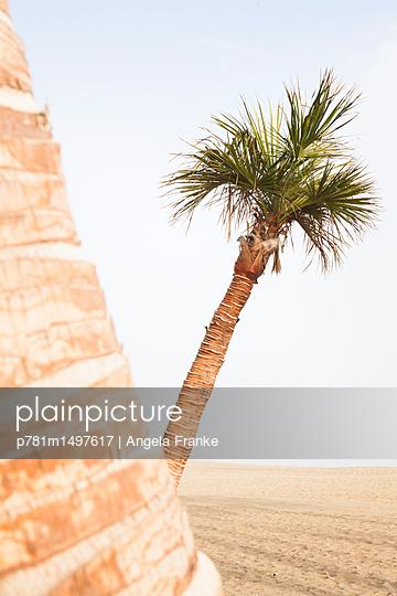 Palmen - p781m1497617 von Angela Franke