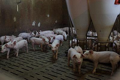 Tierhaltung - p1058m817163 von Fanny Legros
