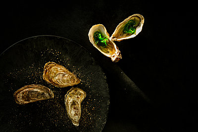 Oysters - p1276m2127035 by LIQUID