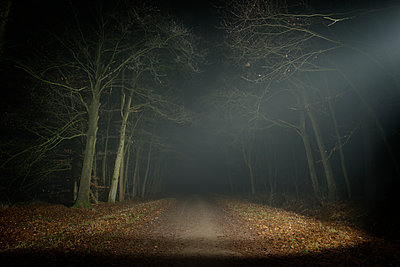 Forest at night, Breda, North Brabant, Netherlands - p429m1226740 by Mischa Keijser