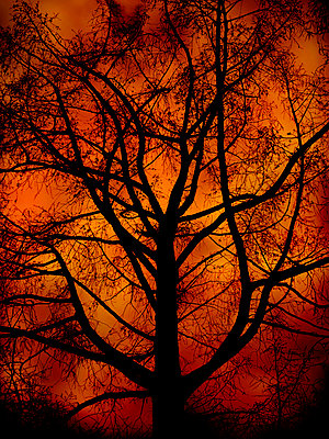 Magical tree - p1028m2289446 by Jean Marmeisse