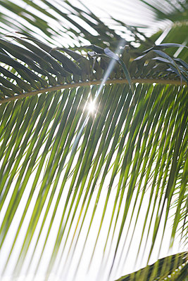 Palm leaf - p741m892068 by Christof Mattes