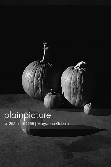 Pumpkin Still Life - p1262m1184869 by Maryanne Gobble