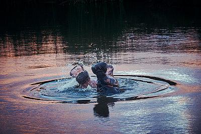 Flusspferde - p1164m1590019 von Uwe Schinkel