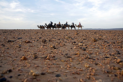 Camel rides in the Western Sahara - p589m885699 by Thierry Beauvir