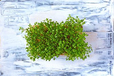 Organic garden cress - p300m1562516 by Thomas Jäger