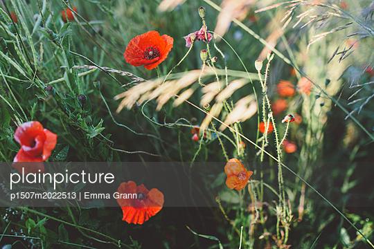 p1507m2022513 von Emma Grann