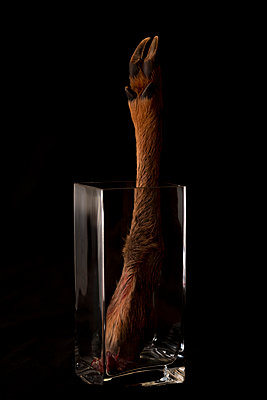 Severed deer leg in a glass jar - p1625m2230301 by Dr. med.