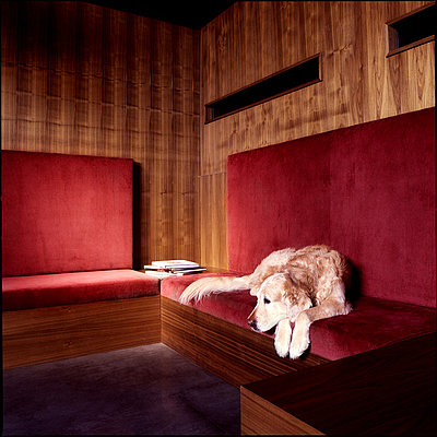 dog on a red corduroy couch - p2682761 by Wolfgang Uhlig
