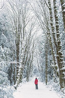 Woman in spruce forest, Bainbridge Island, Washington, US - p924m1230274 by Pete Saloutos