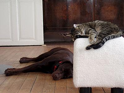 Katze und Hund chillen - p1650m2230880 von Hanna Sachau