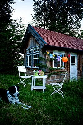Lampions im Garten - p533m925183 von Böhm Monika