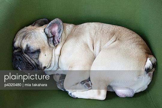 Mittagsschlaf eingerollt - p4320480 von mia takahara