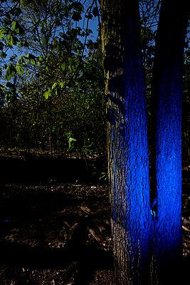 Baum im Wald blau angeleuchtet - p1212m1134646 von harry + lidy