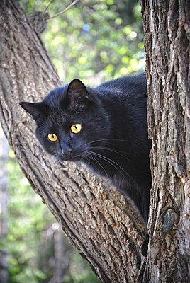 Cat - p322m660429 by Karoliina Norontaus