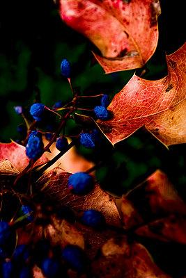 Leaves - p580m762814 by Eva Z. Genthe