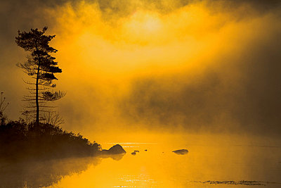 Lone Pine and Sunrise through Golden Lake Mist, Rocky Lake, Lakeview, Nova Scotia - p6071680 by Irwin Barrett
