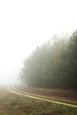 Trees in foggy  day. Foggy forest - p1166m2151791 by Cavan Images