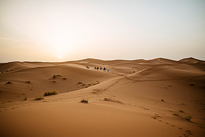 Morocco, Meknes-Tafilalet, Midelt, Merzouga, Dune landscape in the desert Erg Chebbi. - p300m1167001 by Kiko Jimenez
