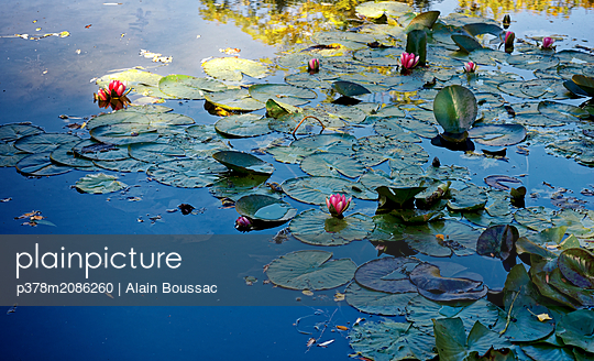 Water Lilies - p378m2086260 by Alain Boussac