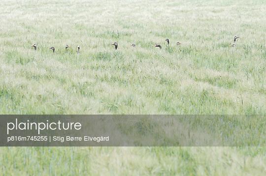 p816m745255 von Stig Børre Elvegård