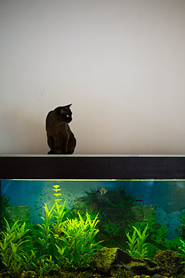 Fish and cat - p445m1177048 by Marie Docher
