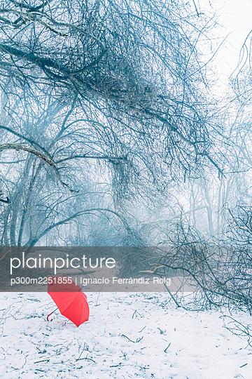 Red umbrella on snow covered land in forest - p300m2251855 by Ignacio Ferrándiz Roig
