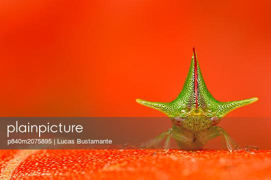 p840m2075895 von Lucas Bustamante
