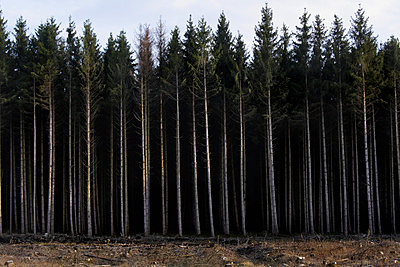 Clearing a forest - p8670038 by Thomas Degen