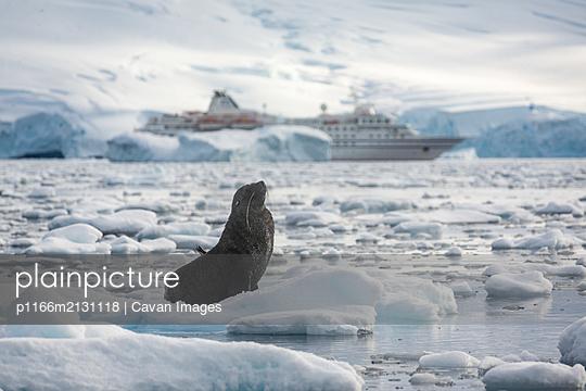 Fur seal on iceberg in front of boat - p1166m2131118 by Cavan Images
