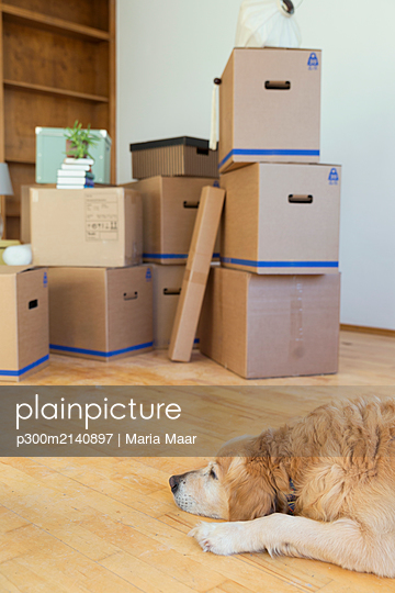 Dog lying on the floor in front of cardboard boxes in an empty room in a new home - p300m2140897 by Maria Maar
